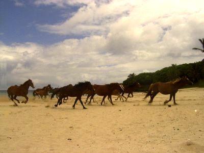 pferde-f.jpg